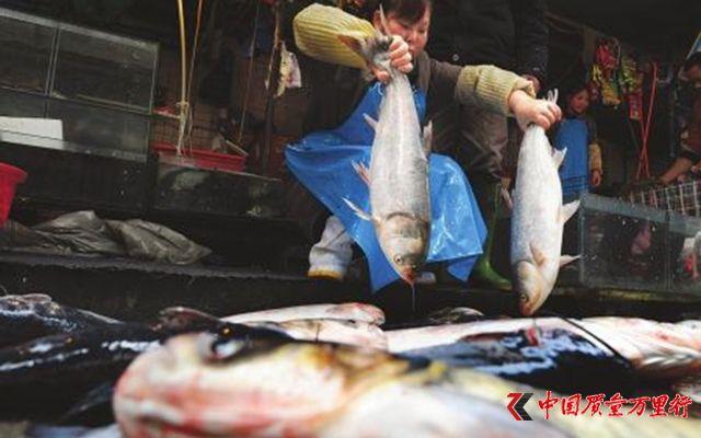 监管部门信息打架,北京活鱼下架的真相到底是什么?