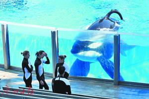 """圣地亚哥海洋世界 """"杀人鲸""""最后演出"""