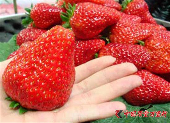 """三月采摘季 带你领略津城里的""""莓""""好时光"""