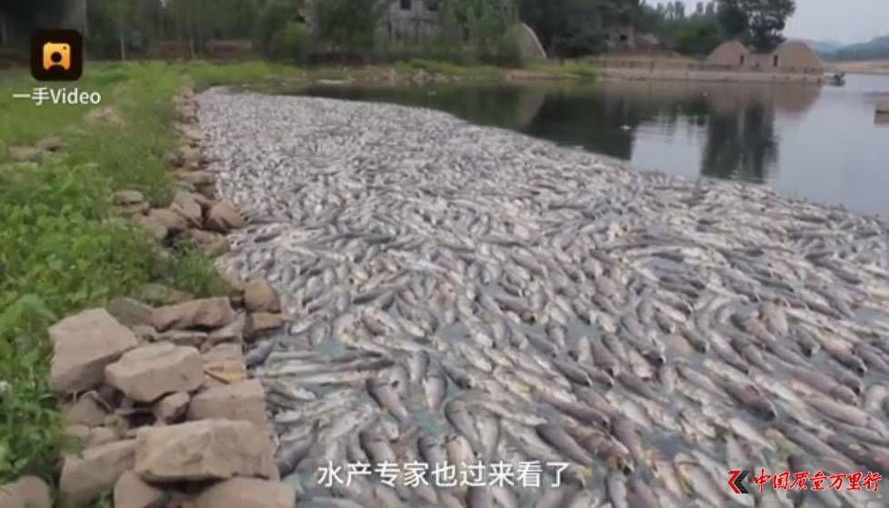 6万斤鱼缺氧死亡 农户损失高达40万向谁诉苦