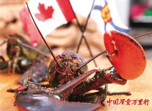 跨境生鲜电商崛起:中国人一年吃掉逾7亿加拿大龙虾