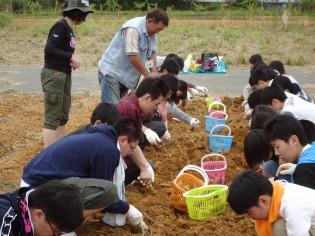 日本学生修学旅行体验挖红薯