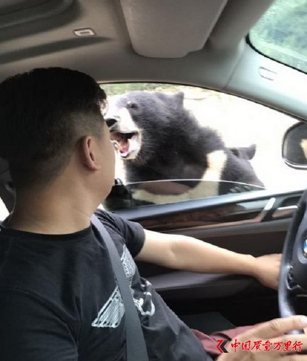游客八达岭野生动物园猛兽区开窗投食 被黑熊咬伤