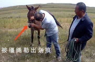"""游客草原天路被骡子""""碰瓷""""?警方:游客方有过错"""