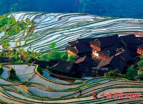 从江有机大米的综合品质