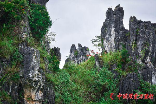 贵州龙化石遍布黔西南,专家却说它不是恐龙?