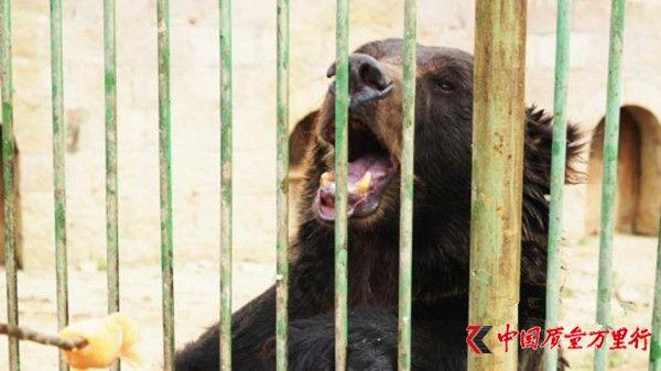 """动物园""""熊咬人""""事件当事人否认讹钱:没要求赔偿"""