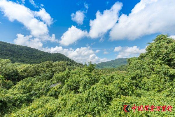 看腻了三亚千篇一律的海景,换个口味看热带雨林