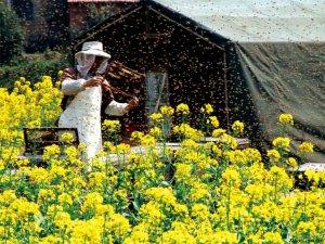 中国质量万里行走进江山 探寻蜂产业变局
