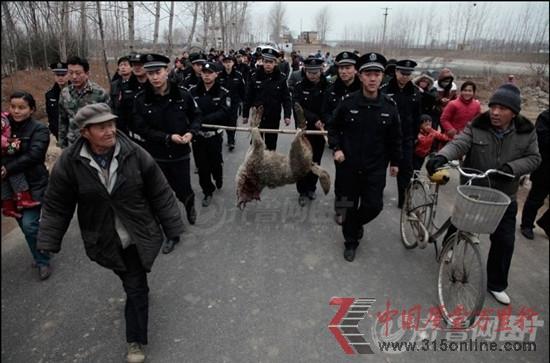 山东枣庄野狼频伤人 数百警察围捕
