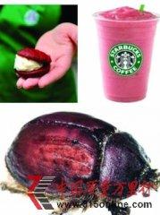 星巴克用虫当着色剂引抗议 胭脂虫红靠进口价格昂贵