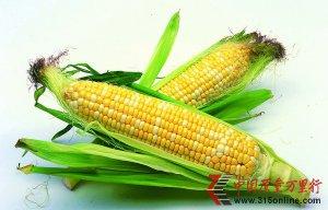 """可怕的""""洋""""玉米种子"""