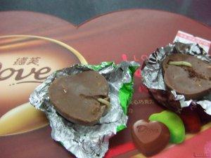 德芙巧克力里吃出3厘米长的虫子