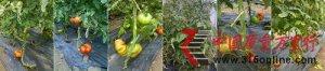 寿光蔬菜种业集团出售假冒伪劣种苗