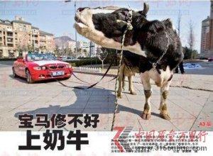 百万宝马4个月未修好 车主雇奶牛拉车讨说法